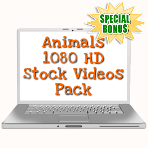 Special Bonuses - November 2017 - Animals 1080 HD Stock Videos Pack